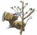 prunings
